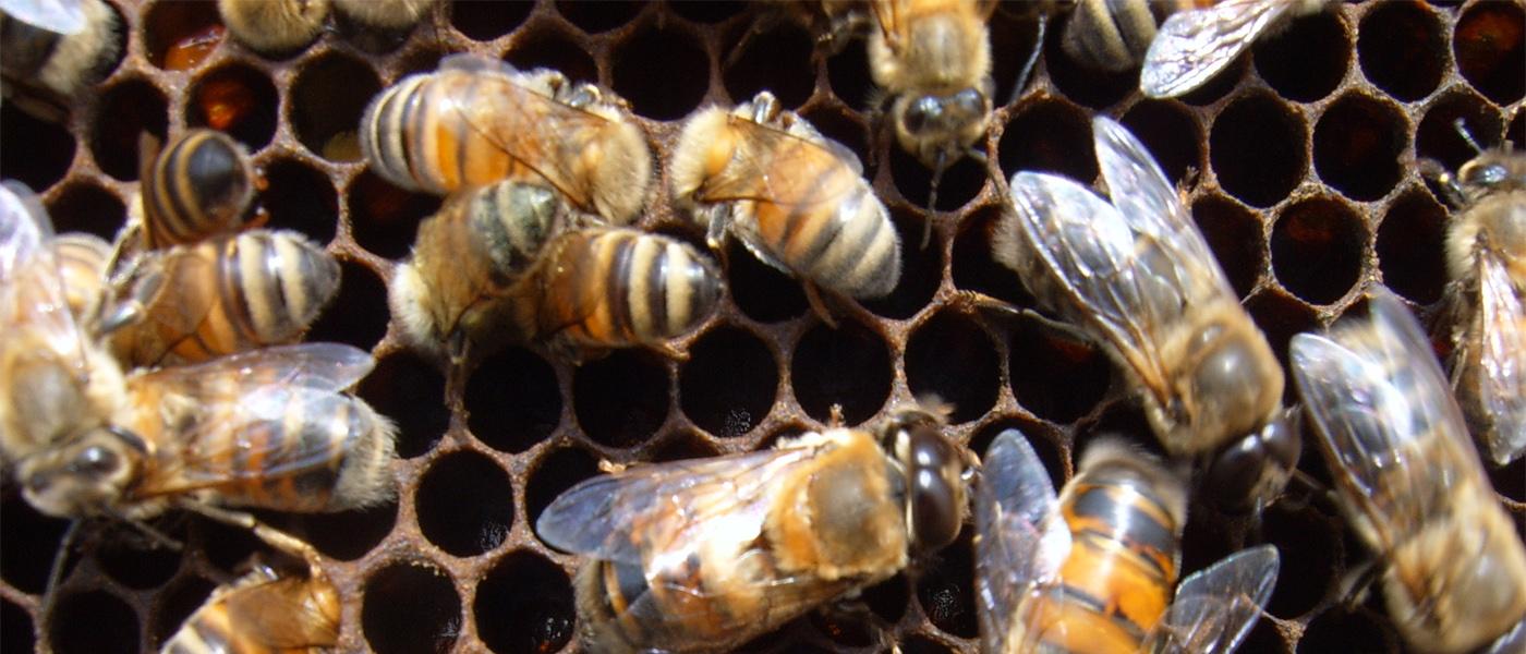 api fuchi